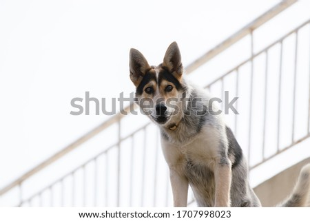 Close up picture of guard dog standing on the roof of a house background, Watchdog concept #1707998023