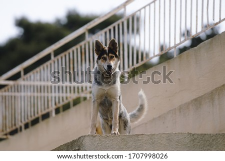 Close up picture of guard dog standing on the roof of a house background, Watchdog concept #1707998026
