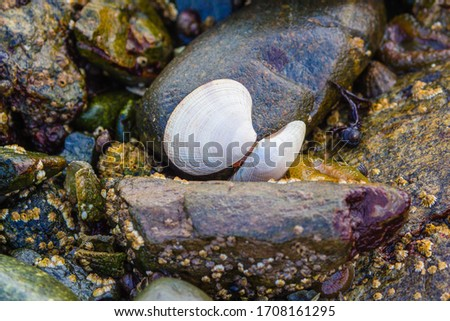 A close up of shells and barnacles among the stones #1708161295