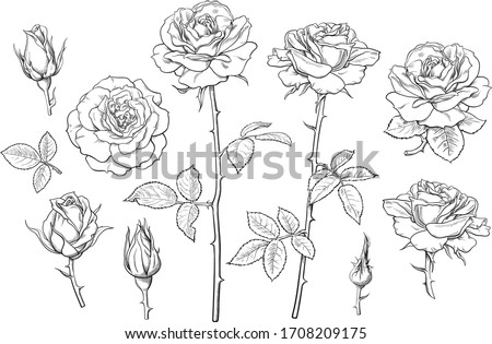 Big set of rose flowers, buds, leaves and stems in engraving style. Hand drawn realistic open and unblown rosebuds. Decorative vector elements for tattoo, greeting card, wedding invitation. #1708209175