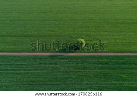 Drone photo of the bright green wheat field separated by the road. There is a tree by the road. aerial view. beautiful minimalist wallpaper. Európa Hungary Royalty-Free Stock Photo #1708256116