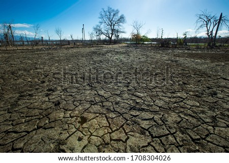 Dried cracked earth aridity ground of lake bottom pattern with dry trees and blue sky on background Enriquillo lake Dominican republic  Royalty-Free Stock Photo #1708304026