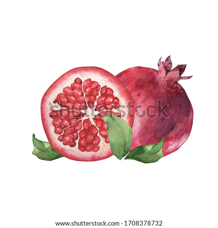Pomegranate clip art 4. Watercolor illustration. Hand drawing. Isolated on white