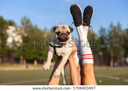 Picture of funny puppy pug dog on man's hands and legs on a natural surroundings. Close up. Horizontal photo.