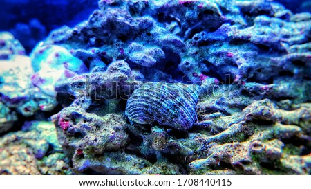 Close up image of saltwater snail invertebrate sea creature Royalty-Free Stock Photo #1708440415