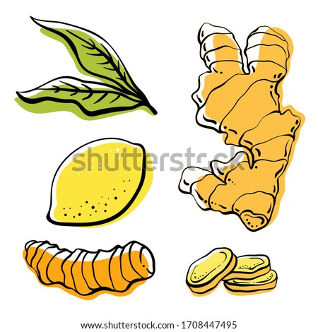 Ginger, lemon, turmeric. Roots and slices. Colorful sketch collection of herbs and spices isolated on white background. Doodle hand drawn healthy food icons. Vector illustration Royalty-Free Stock Photo #1708447495