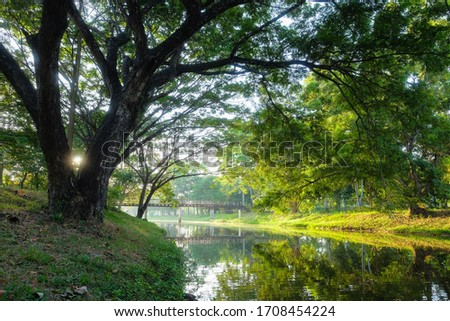green natural landscape picture of river, the forest with a big tree foreground in the morning sunrise.