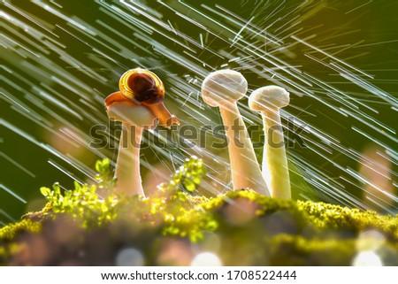 Snail rained on mushrooms, macro photos
