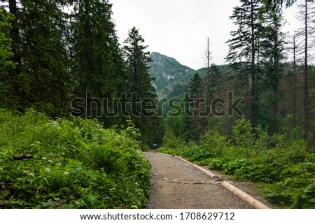 Road in the forest with fresh green colors of bushes and pine trees and wooden logs on the side of the road, Poland in summer #1708629712
