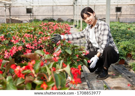 Confident chinese female on plantation of begonia in her greenhouse #1708853977
