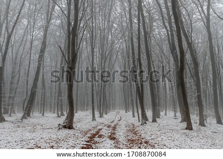 Misty forest fresh snow early winter #1708870084