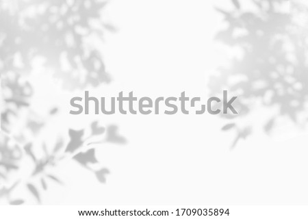 Abstract leaves shadow gray background, natural leaves tree  falling on white concrete wall texture for background and wallpaper, black and white, monochrome, nature art on wall #1709035894