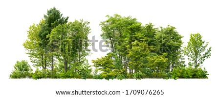 Green trees isolated on white background. Forest and foliage in summer. Row of trees and shrubs. #1709076265