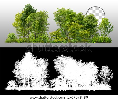 Cutout tree line. Row of green trees and shrubs in summer isolated on transparent background via an alpha channel. Forestscape. High quality clipping mask. Forest and green foliage.