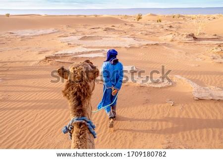 A Bedouin man wearing blue walking with camel through yellow sands of Sahara Dessert, Morocco #1709180782