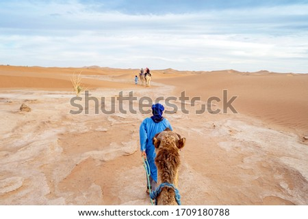 Bedouins walking with camels through yellow sands of Sahara Dessert, Morocco #1709180788