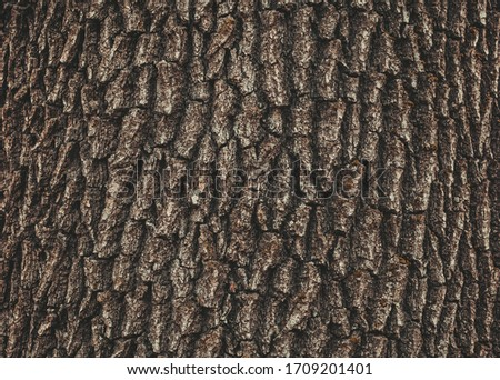 Old Wood Tree Texture Background Pattern #1709201401