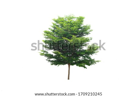 Green tree on isolated, an evergreen leaves plant di cut on white background with clipping path.  #1709210245
