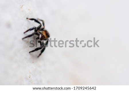 Macro photography of a small jumping spider in a white wall #1709245642