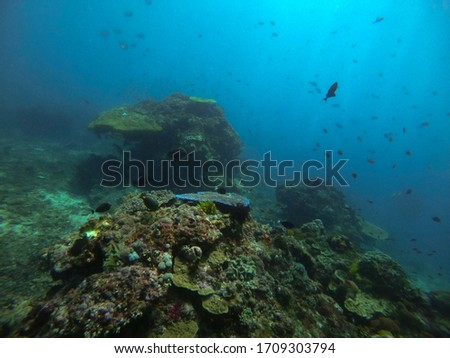 Diving on stunning healthy coral reefs in Bali, Indonesia #1709303794