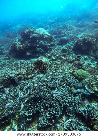 Diving on stunning healthy coral reefs in Bali, Indonesia #1709303875
