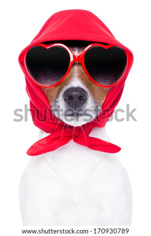 diva dog with red sunglasses cool looking