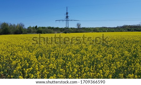 Power pole behind a yellow field #1709366590