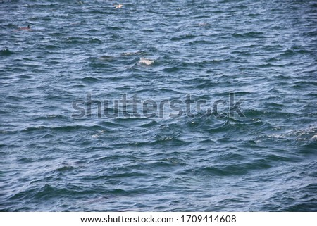 Ocean sea life dolphins in water #1709414608
