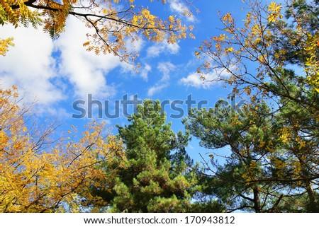 fall treetops in autumn  #170943812