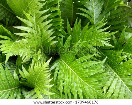 Ferns are vascular plants that can be very diverse depending on the species. Something very characteristic of this group of plants is the absence of flowers. #1709468176