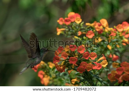 birds photography  about beautiful hummingbirds in the garden