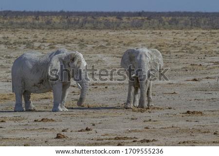 Elephants in Etosha National Park #1709555236