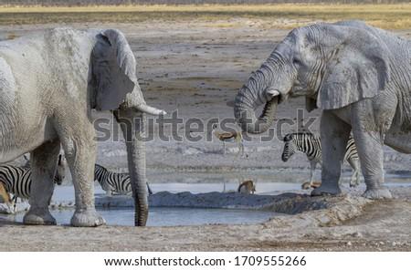 Elephants in Etosha National Park #1709555266