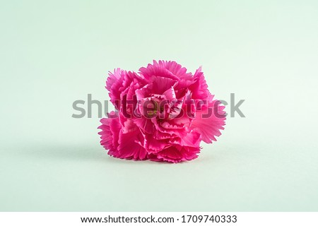 Beautiful carnation flower poster background material #1709740333
