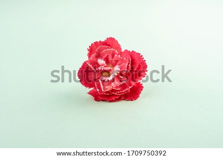 Beautiful carnation flowers for mother's day #1709750392