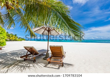 Tropical beach nature as summer landscape with lounge chairs and palm trees and calm sea for beach banner. Luxurious travel landscape, beautiful destination for vacation or holiday. Beach scene  Royalty-Free Stock Photo #1709783104