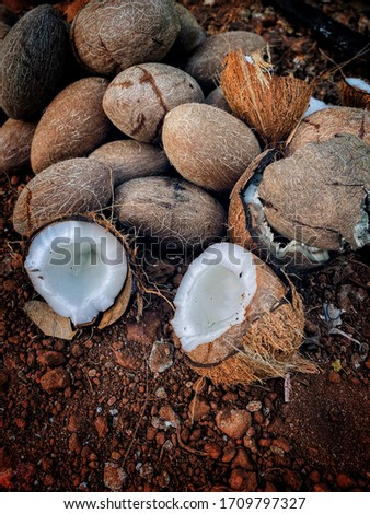 Copra : Dried coconuts from gods own country #1709797327