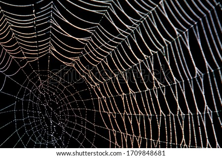Spider web with dew in the dark Royalty-Free Stock Photo #1709848681