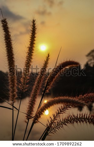 The beautiful moment sunrise pic with grass