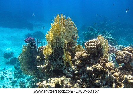 Coral Reef In Red Sea, Egypt. Blue Turquoise Ocean Water, Different Types Of Hard Corals. Branching Fire Coral, Horn Coral, Brain Coral. Underwater Diversity. #1709963167