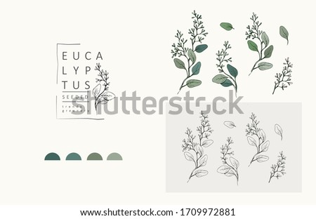 Seeded eucalyptus logo and branch. Hand drawn wedding herb, plant and monogram with elegant leaves for invitation save the date card design. Botanical rustic trendy greenery vector illustration #1709972881