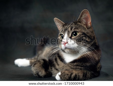 Tabby cat isolated on black background.