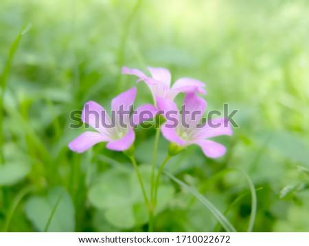 fresh purple beautiful flowers blooming, blurred image nature background