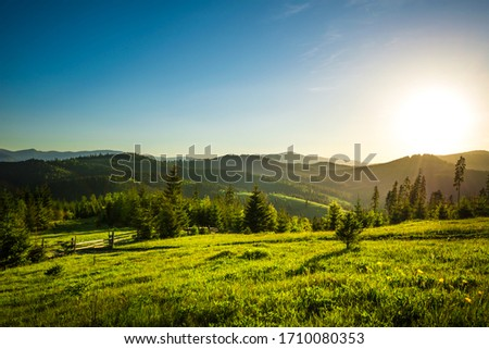 Chic view from hilltop onto a spruce forest growing on the hills and mountains on a sunny warm summer day against a blue sky. Concept of outdoor recreation and relaxation. Advertising space #1710080353