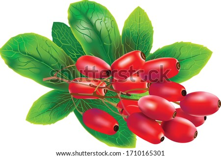 Red barberries with leaves on white background Royalty-Free Stock Photo #1710165301