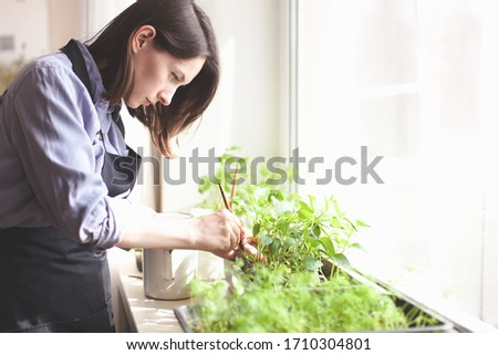gardening home. woman replanting green pasture in home garden.indoor garden,room with plants banner Potted green plants at home, home jungle,Garden room,gardening, Plant room, Floral decor. #1710304801
