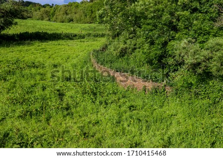 Natural willow tree fence divides two green fields.  This ecologically and environmentally friendly homemade fence acts as a clear demarcation between properties and is cheap to build.