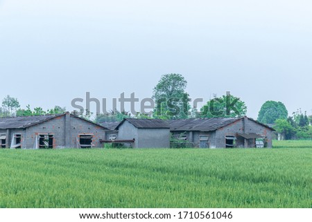Green wheat fields and houses #1710561046