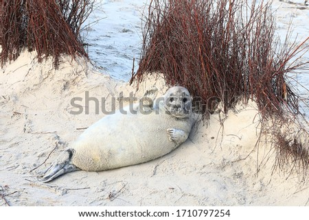 This is a  picture of seal which is very play full and lives in both land and water.