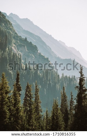 Kyrgyzstan. The nature of Kyrgyzstan. Summer. Mountain landscape. Among the tall, dense green spruces, mountains are visible at dawn. Screensaver photo
